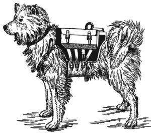 собаки истребители танков