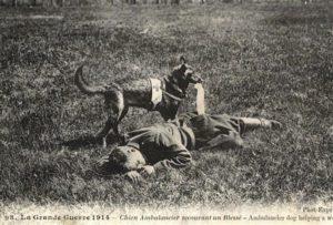 Собаки в Первой мировой войне