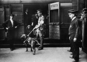 Ричардсон санитарные собаки