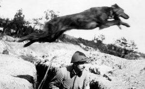 собаки-связисты первая мировая война
