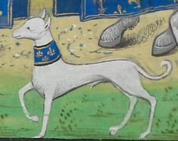 Широкий ошейник 15 век